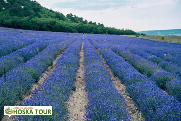 Zastávka u levandulového pole – Provence